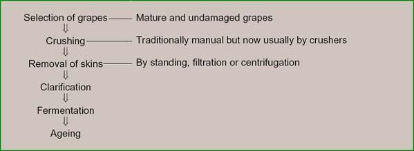 Grapewine03.jpg